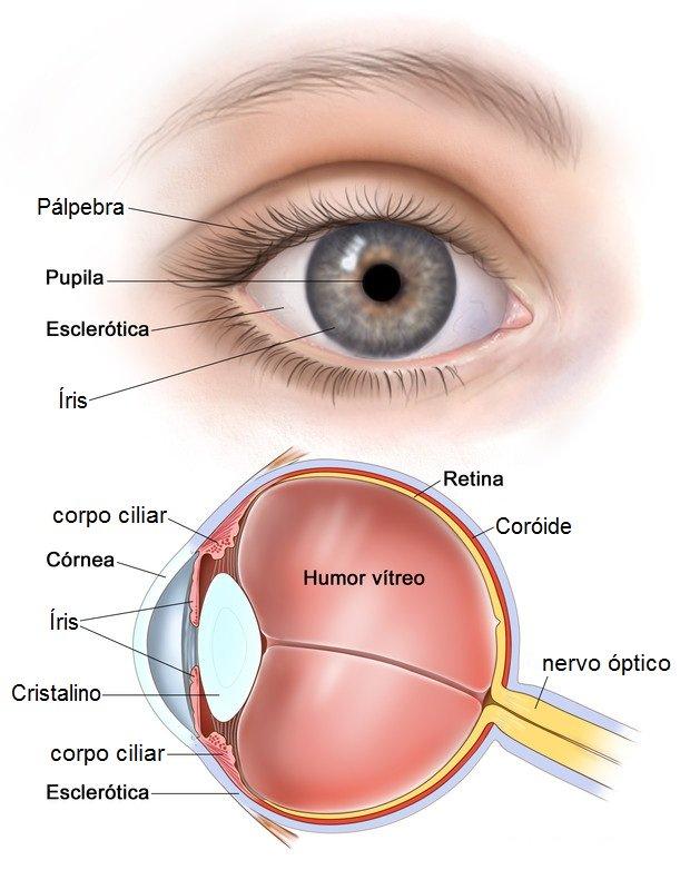 Foto: http://www.oftalmologistabh.com.br/